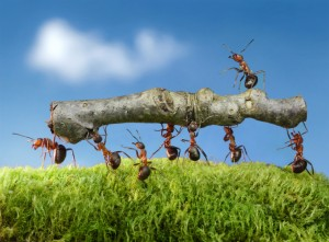 Ant Removal West Fenton