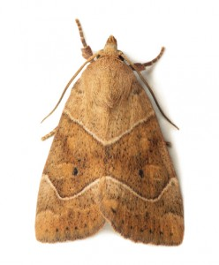 Moths Fife